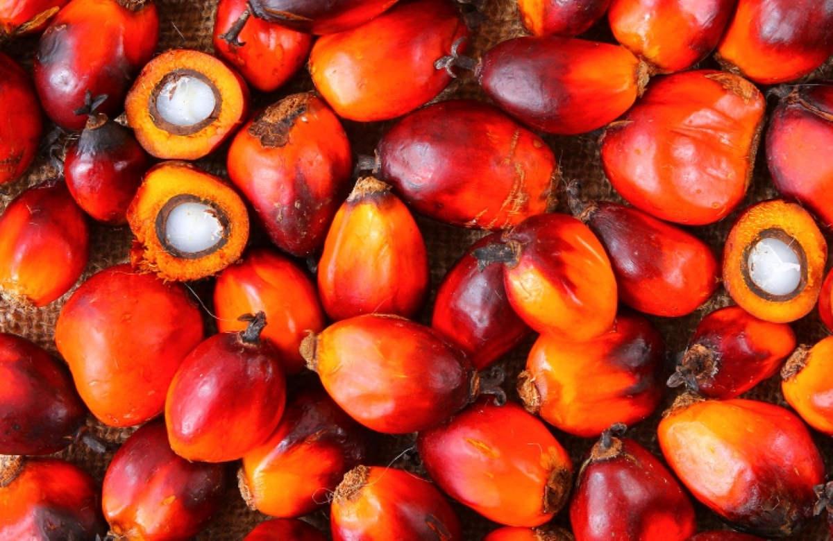 L'olio di palma? Forse non è così cattivo come viene descritto