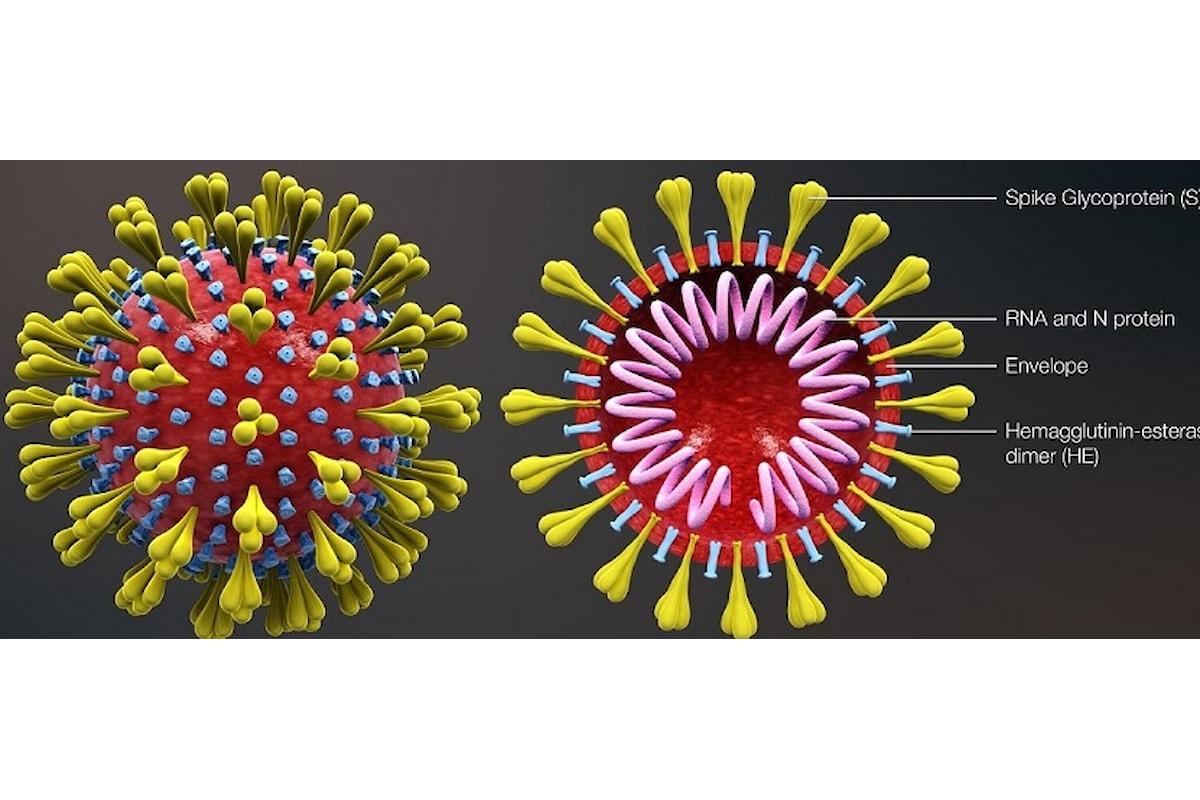 Coronavirus, le mutazioni fanno paura: è lotta contro il tempo.