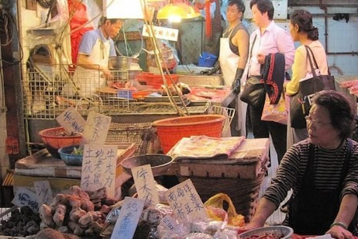 Coronavirus, in Cina in arrivo il divieto di consumare carne di cane e gatto