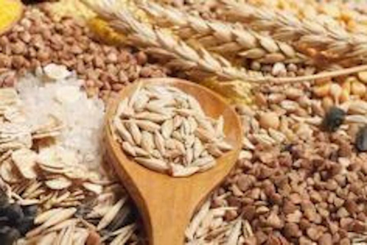 Commodities, ripresa lenta ma costante per le quotazioni del grano