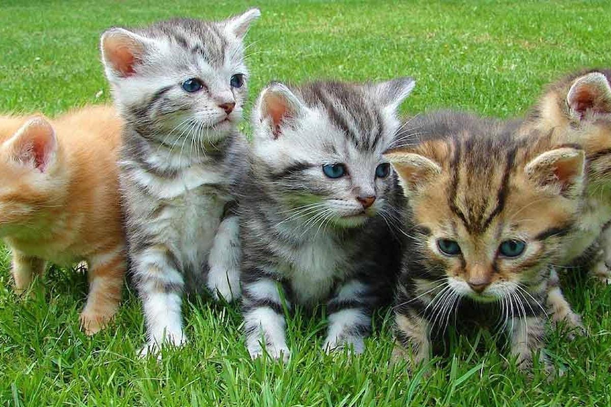 Gatti in appartamento, le razze di gatti che rimangono piccole