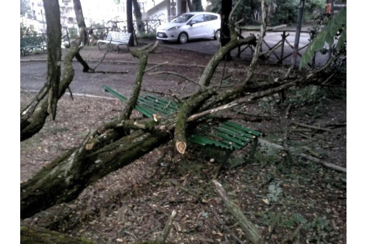 IL VERDE PUBBLICO A PERUGIA? Non è certo la vetustà degli alberi a farli cadere!