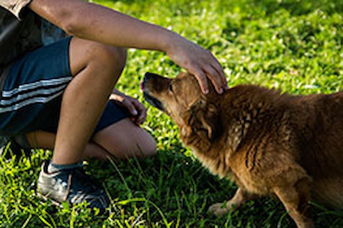 Milazzo (ME) – Gestione cani a Baronello, le puntualizzazioni di Midili