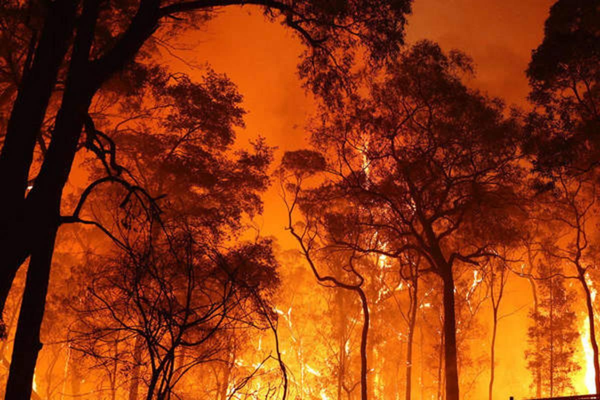 Il WWF ci ricorda che per gli incendi non bisogna incolpare solo il caldo torrido...
