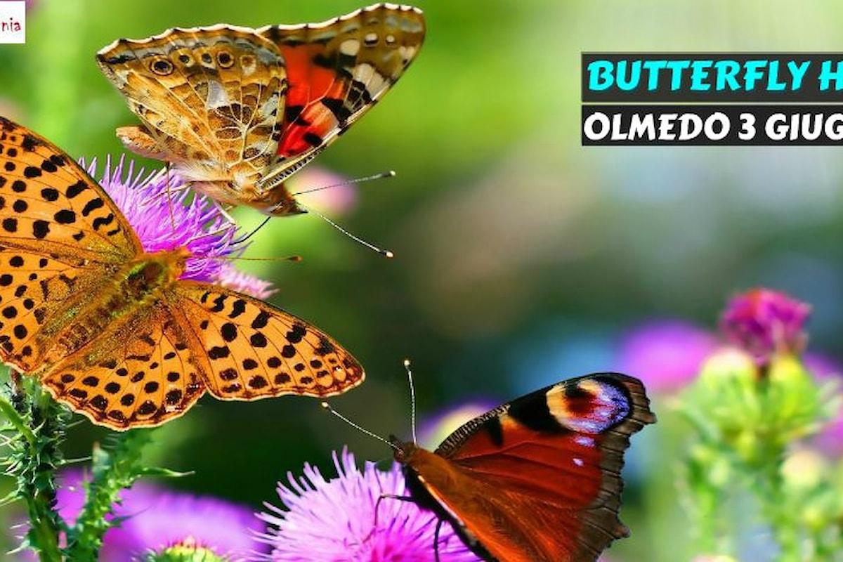 Alla casa delle farfalle con buySardinia: Olmedo, domenica 3 giugno
