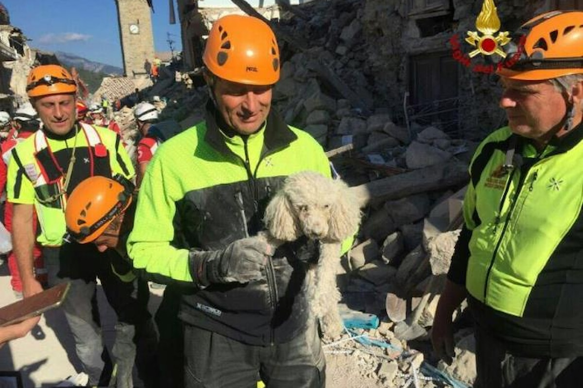 D'ora in poi, per legge, la Protezione Civile in caso di calamità dovrà occuparsi anche di animali