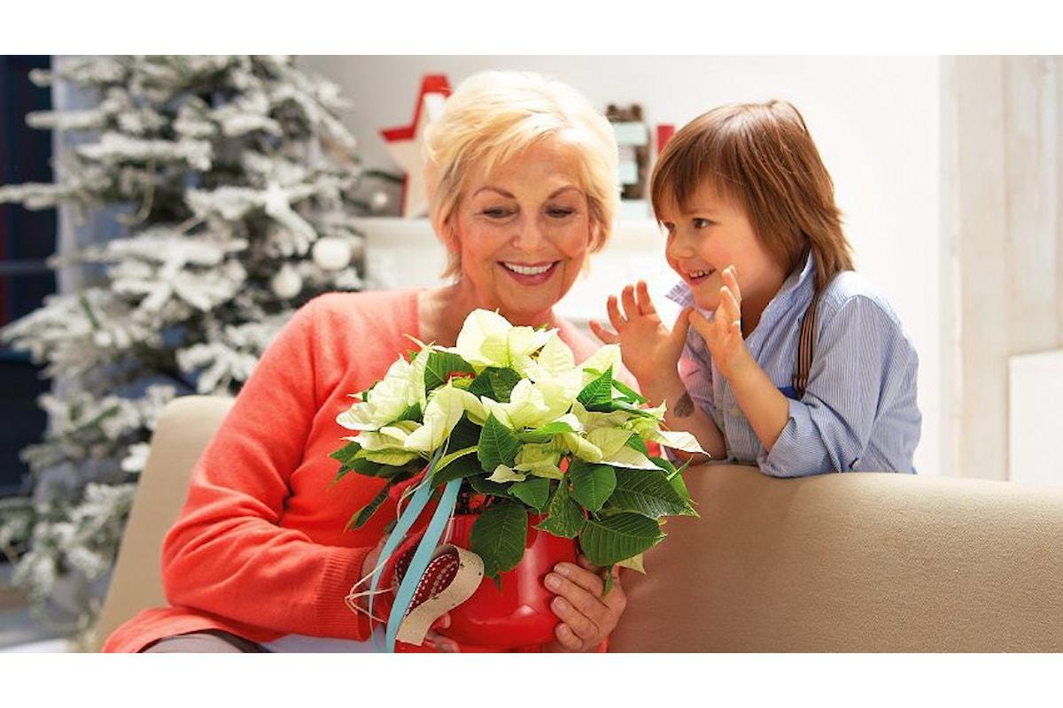 Decoriamo la tavola delle feste con Poinsettia, la stella di Natale!