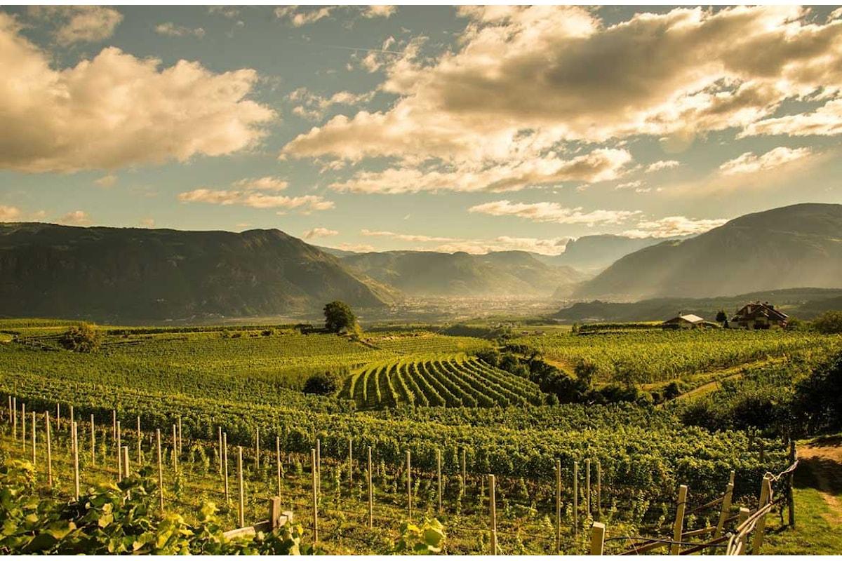 Vini bianchi o rossi, quest'anno la Cantina San Michele-Appiano eccelle