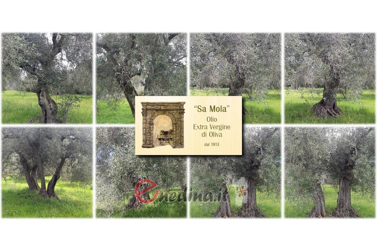 Adotta un ulivo in Sardegna, i Fratelli Cadoni di Escolca ti offrono l'Olio Sa Mola