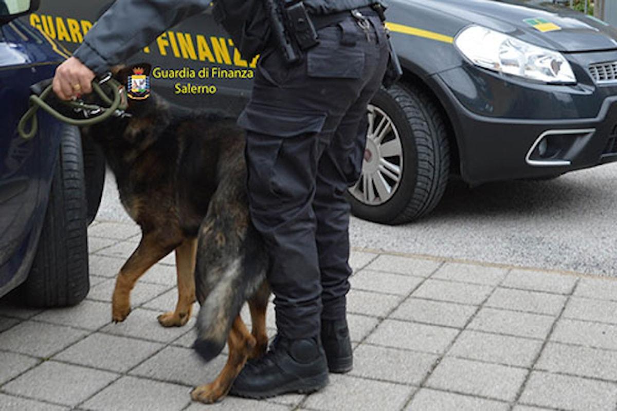 Salerno: Zebon il cane antiroga colpisce ancora, quattro denunce