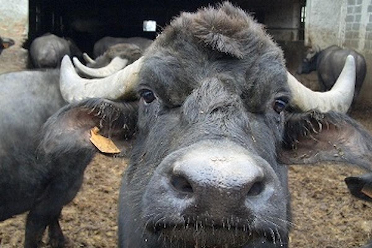Neanche una tragedia come il terremoto ferma i creatori di bufale