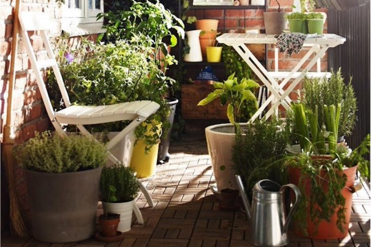 È possibile fare l'orto in vaso? Quali sono gli ortaggi che possono essere piantati in vaso? Come coltivare l'orto in vaso? Scoprilo con noi