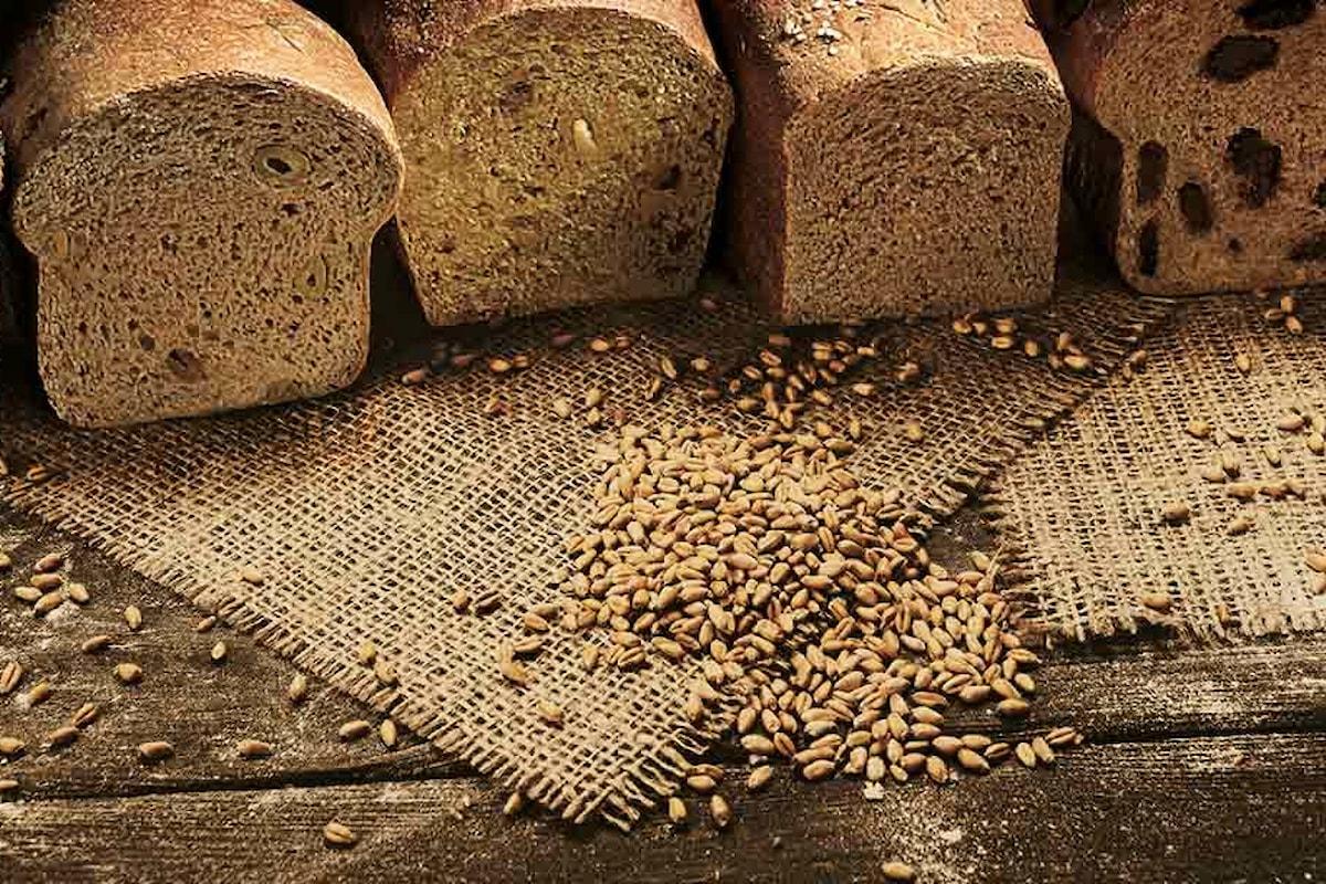 Le fermentazioni primordiali. Cosa sono?