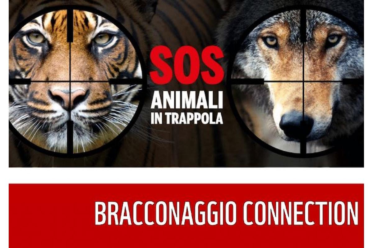 WWF, si chiude il 20 maggio con la Giornata delle Oasi la raccolta fondi per fermare i crimini di natura