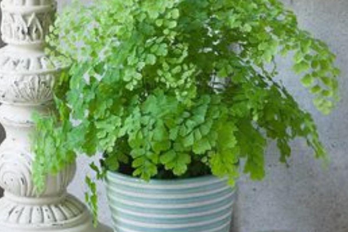 Promette alla moglie in punto di morte di prendersi cura delle sue piante. Dopo anni la sorpresa.
