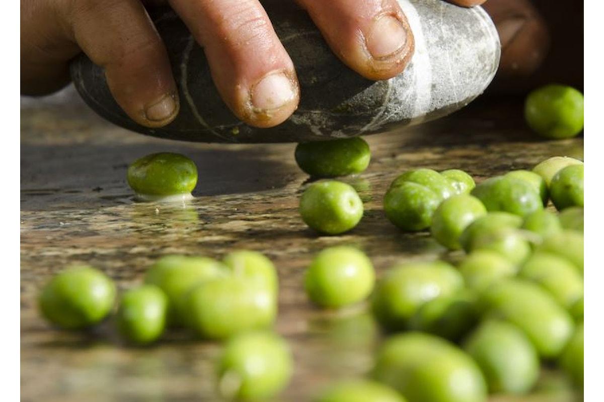 A Verona martedì 17 aprile un convegno di Slow Food per la tutela e la promozione dell'olio extravergine d'oliva