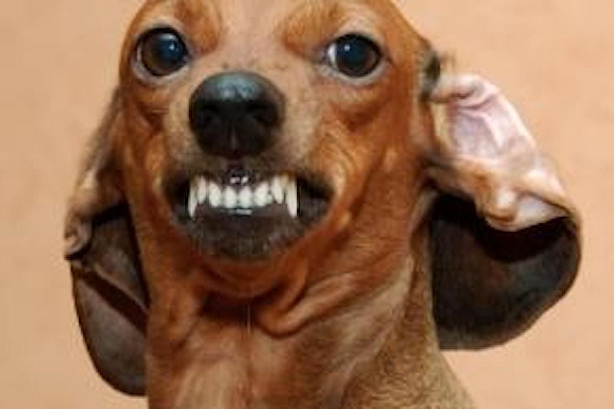 Arriva l'esorcista per cani