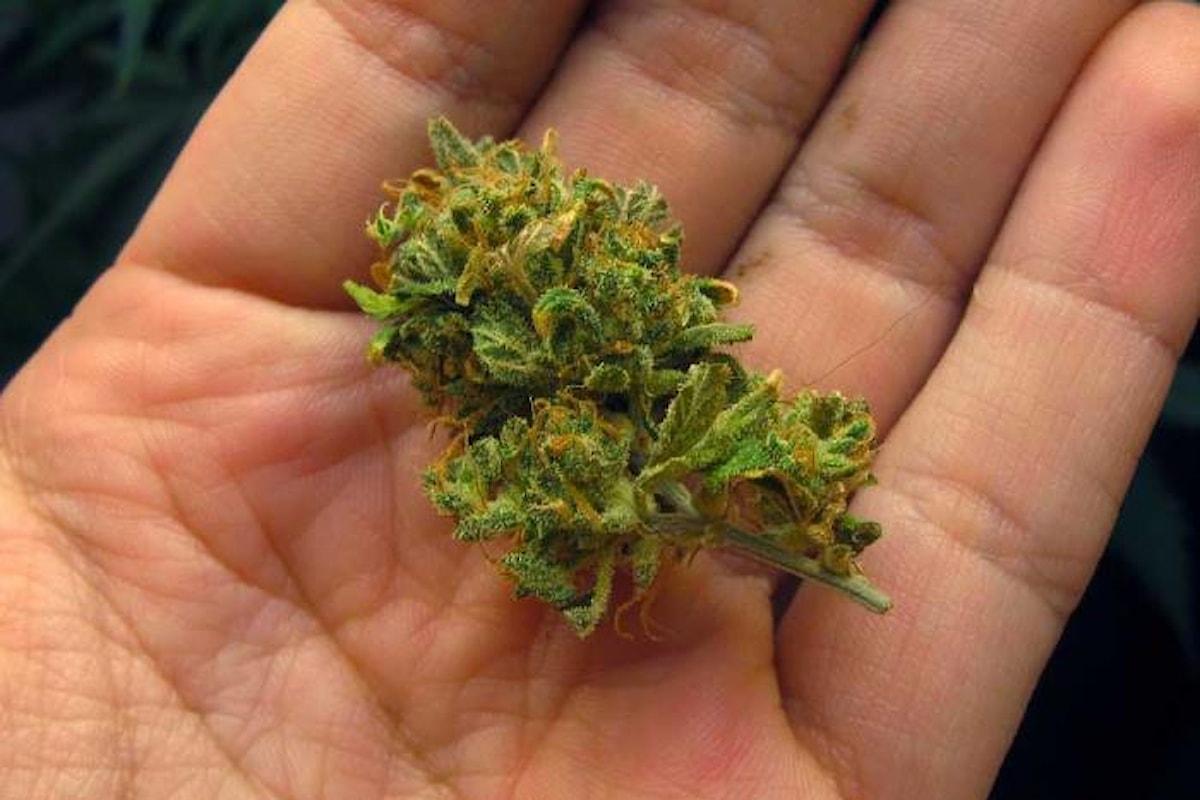 Il Css raccomanda di vietare la vendita della cannabis legale, che cosa farà la ministra Grillo?